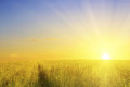 Sunshine Heals Cancer, and the FDA is Powerless to Stop It, Regulate It or Ban It